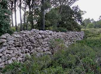 La terra no cultivada i el marge es van incorporant al tapís de la garriga.