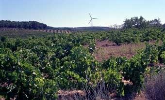 L'apreciat vi de la Terra Alta s'obté d'aquestes vinyes. Al fons, un  parc eòlic.