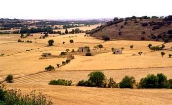 Vista general des del castell de Malgrat, amb les típiques construccions del camp. Al fons es veu la Prenyanosa.