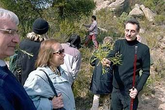 En Josep Preixens ens mostra un matoll de vesc, del que s'utilitzava per a preparar la pega.