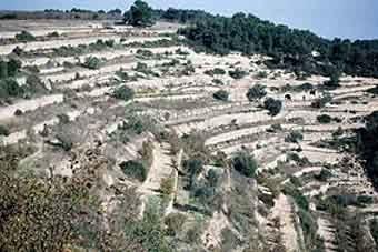 Els marges, com  a  corves  de  nivell de gran pendent,  limiten feixes estretes i allargassades, i determinen bona  part del paisatge cap el terme d'Ascó.