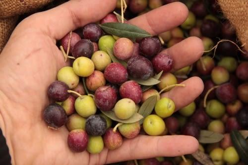 Olives de casa
