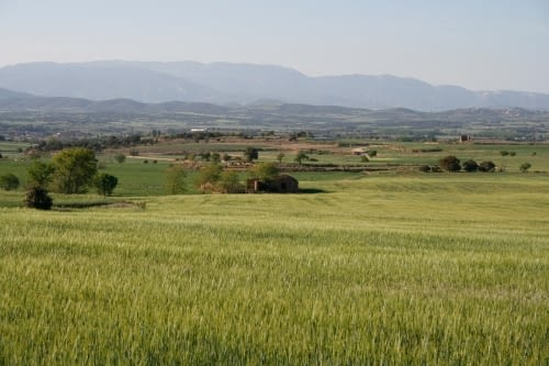 Secans de Lleida
