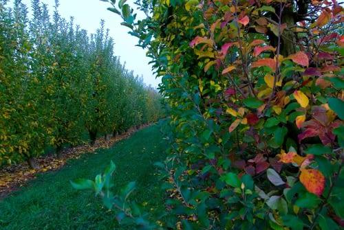 Fruiters Plana de Lleida