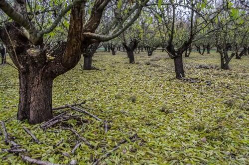 Tardor a la Plana de Lleida