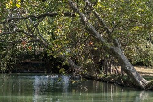 Bassa de reg al Canal d'Urgell