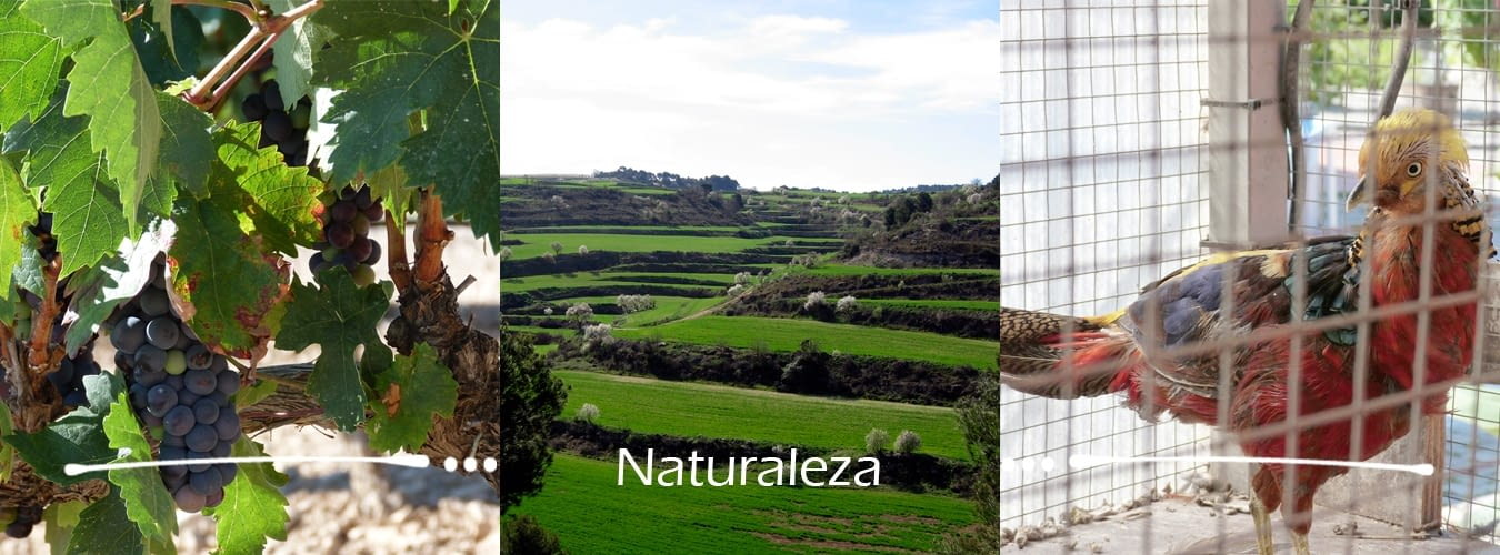 naturalesa_castella