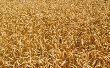 Informe de Octubre del Mercado de Cereales