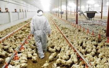 La IA rusa genera una advertencia para las granjas europeas