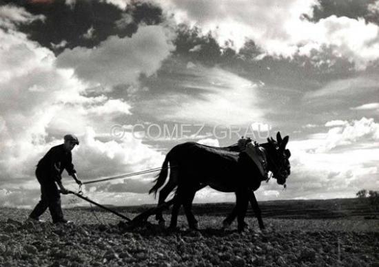El Fons Fotogràfic de Claudi Gómez Grau. Una mirada etnològica