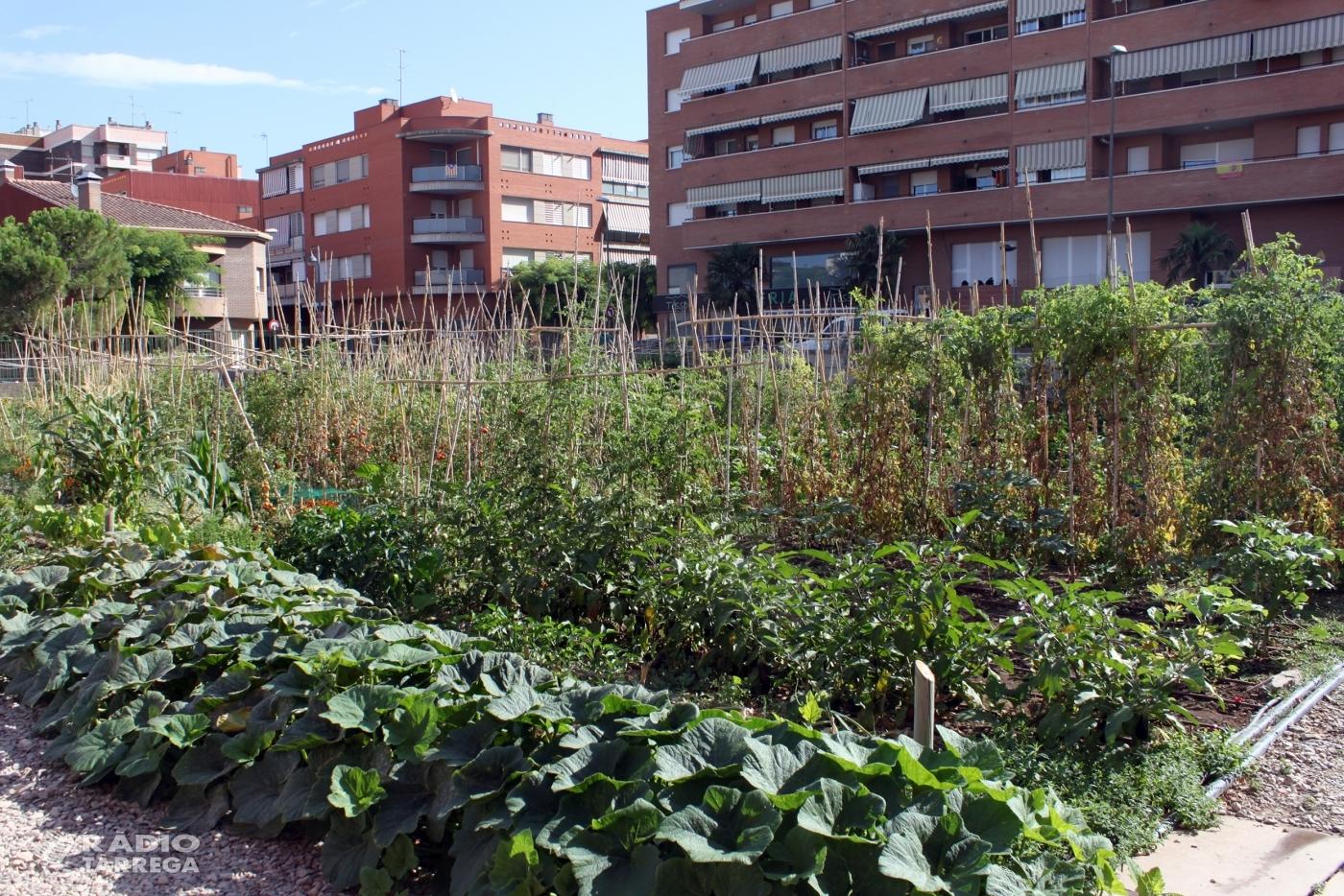 L'Ajuntament de Tàrrega obre el termini de sol·licituds per fer ús dels horts socials, amb 25 parcel·les destinades a l'autoconsum