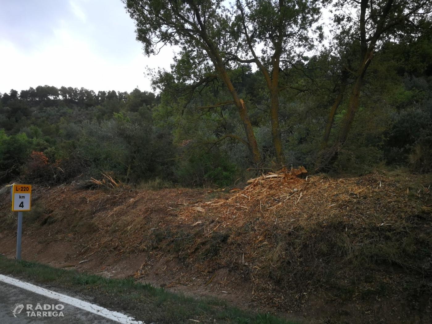 Denuncia per la destrossa de l'arbrat a les carreteres C-14 i L- 220 a la comarca de l'Urgell