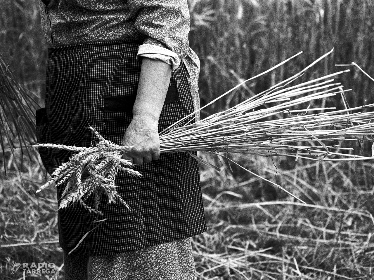 Un estudi sosté que l'envelliment i la despoblació afectaran el món rural de manera desigual els pròxims anys