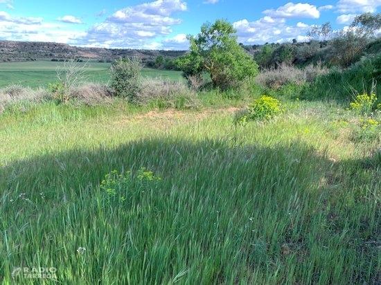 Deixar marges més amples als camps de cereal pot reduir les males herbes, segons una recerca en què participa la UdL