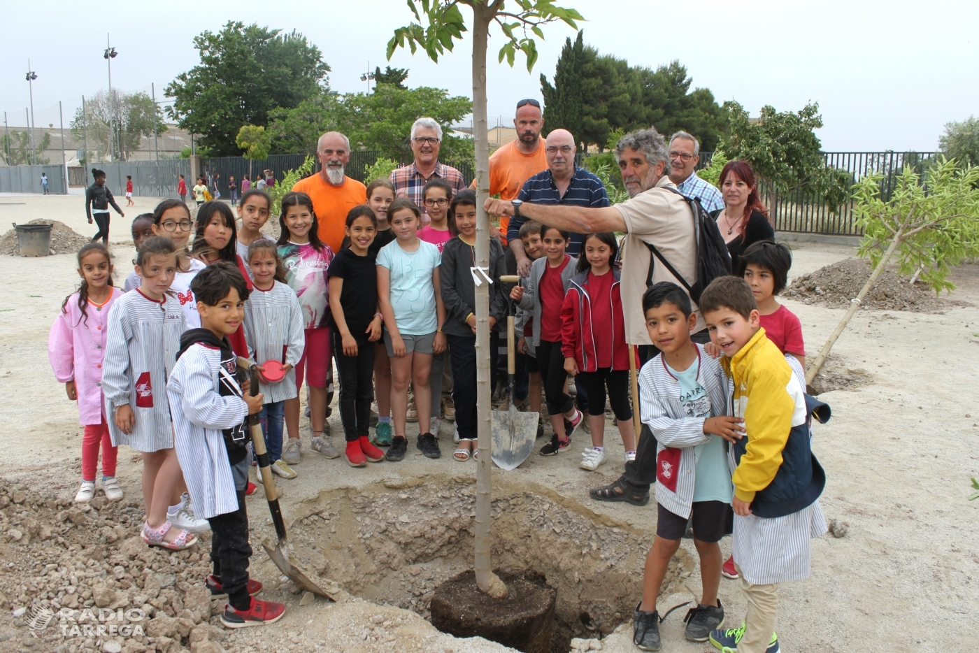 Tàrrega celebra el Dia Mundial del Medi Ambient amb una plantada d'arbres al Col·legi Àngel Guimerà