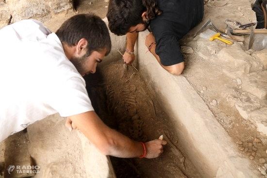La campanya d'excavacions a la Iesso de Guissona posa al descobert un esquelet de l'època tardo-romana
