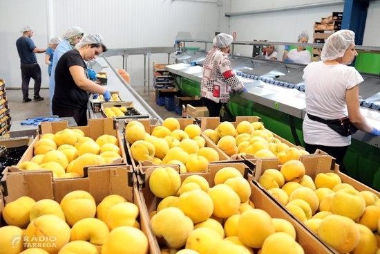 Les exportacions lleidatanes cauen un 4,1% el primer semestre de l'any i tot just superen els 900 MEUR