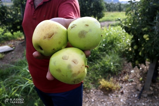 Una tempesta acompanyada de pedra afecta cultius de fruita a diferents punts del Pla d'Urgell