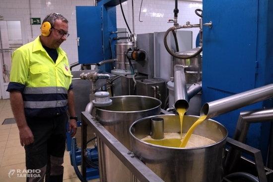 La sequera situarà la producció d'oli de la DOP Les Garrigues entorn dels tres milions de quilos