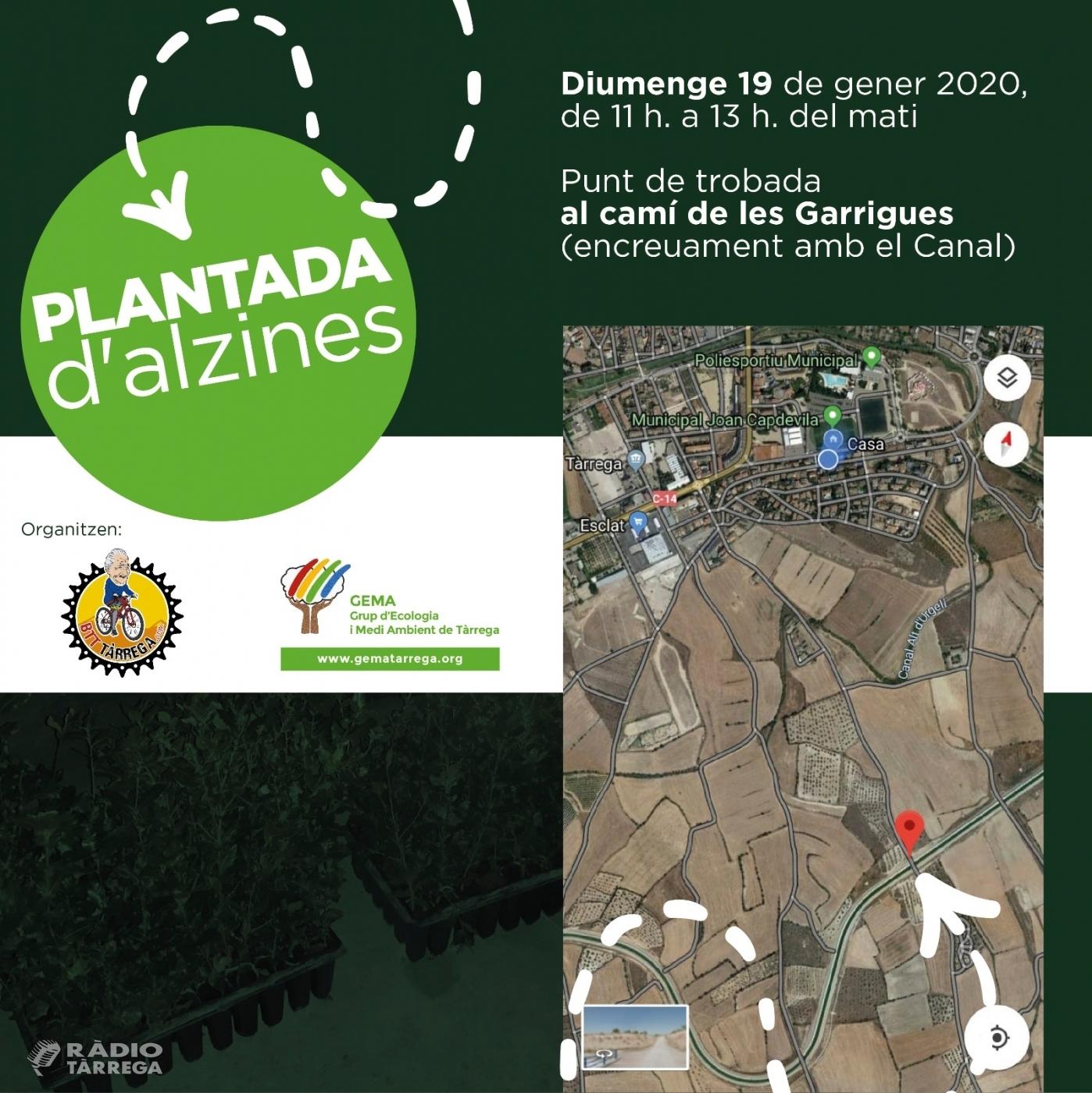 BTT Tàrrega i GEMA organitzen una plantada d'alzines a les zones ermes del canal Segarra Garrigues al seu pas per Tàrrega