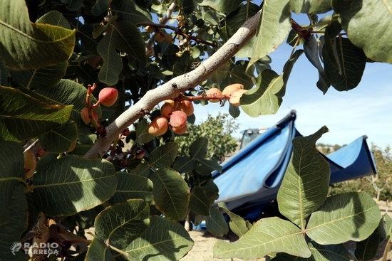 Borges Agricultural & Indutrial Nuts obté 2,1 MEUR al tancament del primer semestre