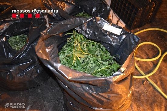 Desarticulada una organització criminal a Ponent que va passar de robar a cases aïllades al tràfic de marihuana