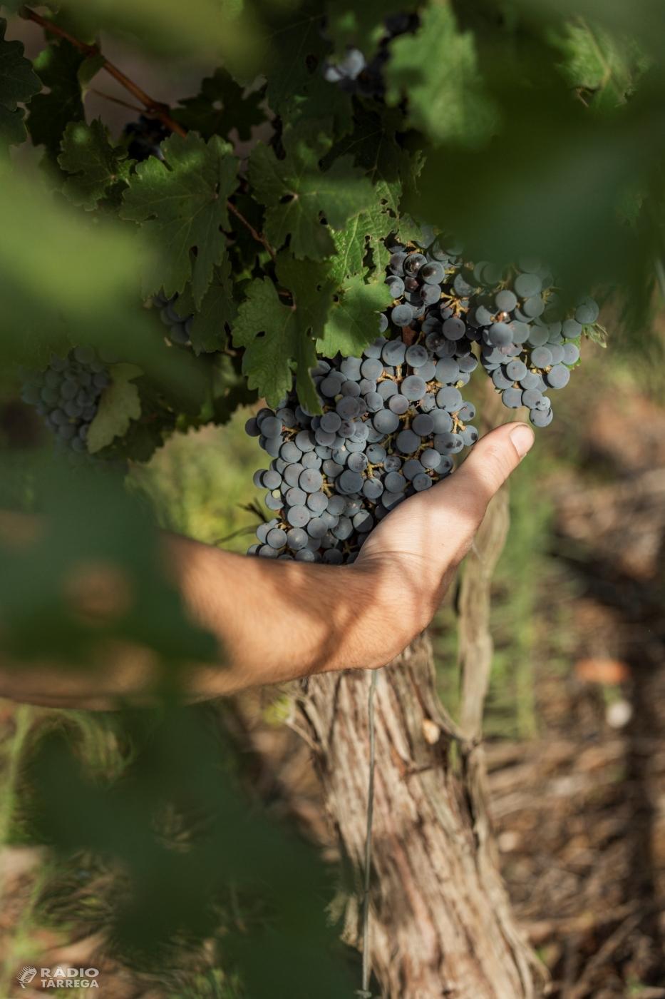 El Consell Comarcal de l'Urgell entra a formar part de la Ruta del Vi de Lleida
