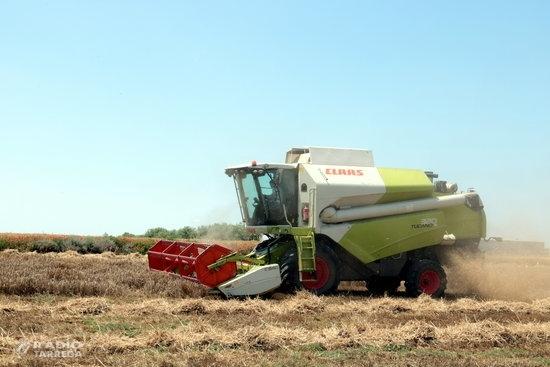 Les pluges i els fongs fan caure un 25% la producció de cereal d'una campanya que es prèvia 'històrica'