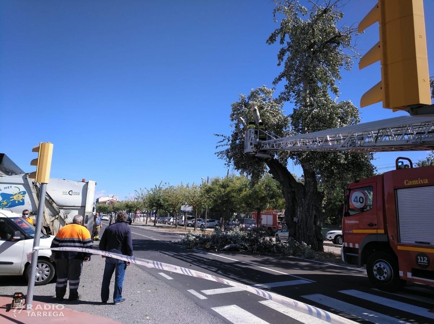El vent provoca diversos incidents a Tàrrega, principalment en arbres i contenidors