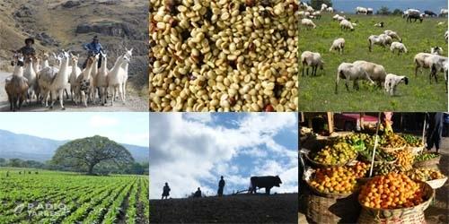 Alimentació, agricultura i ramaderia, els sectors lleidatans que confien resistir millor la crisi de la covid-19