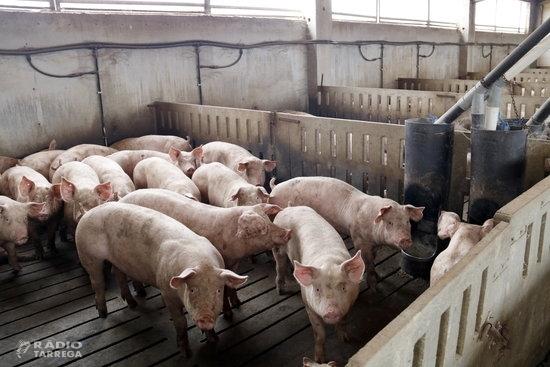 Unió de Pagesos valora positivament el 2020 per al porcí, amb un marge mitjà d'uns 20 euros per animal