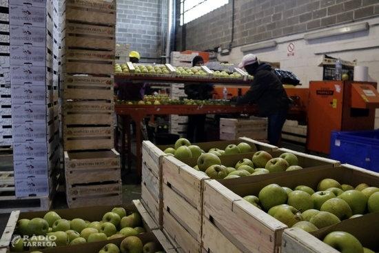 Afrucat preveu que les existències de poma a les cambres catalanes s'esgotaran abans de l'estiu