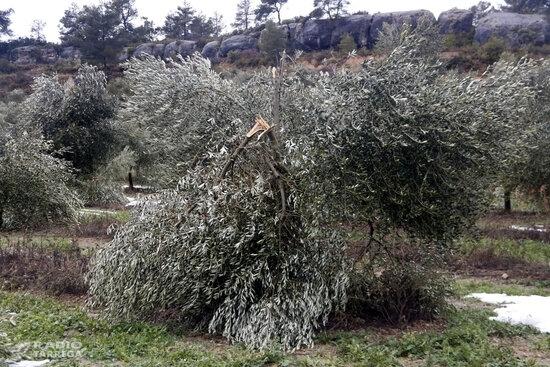 JARC demana celeritat per gestionar la compensació dels danys provocats pel temporal Filomena a Tarragona i Ponent