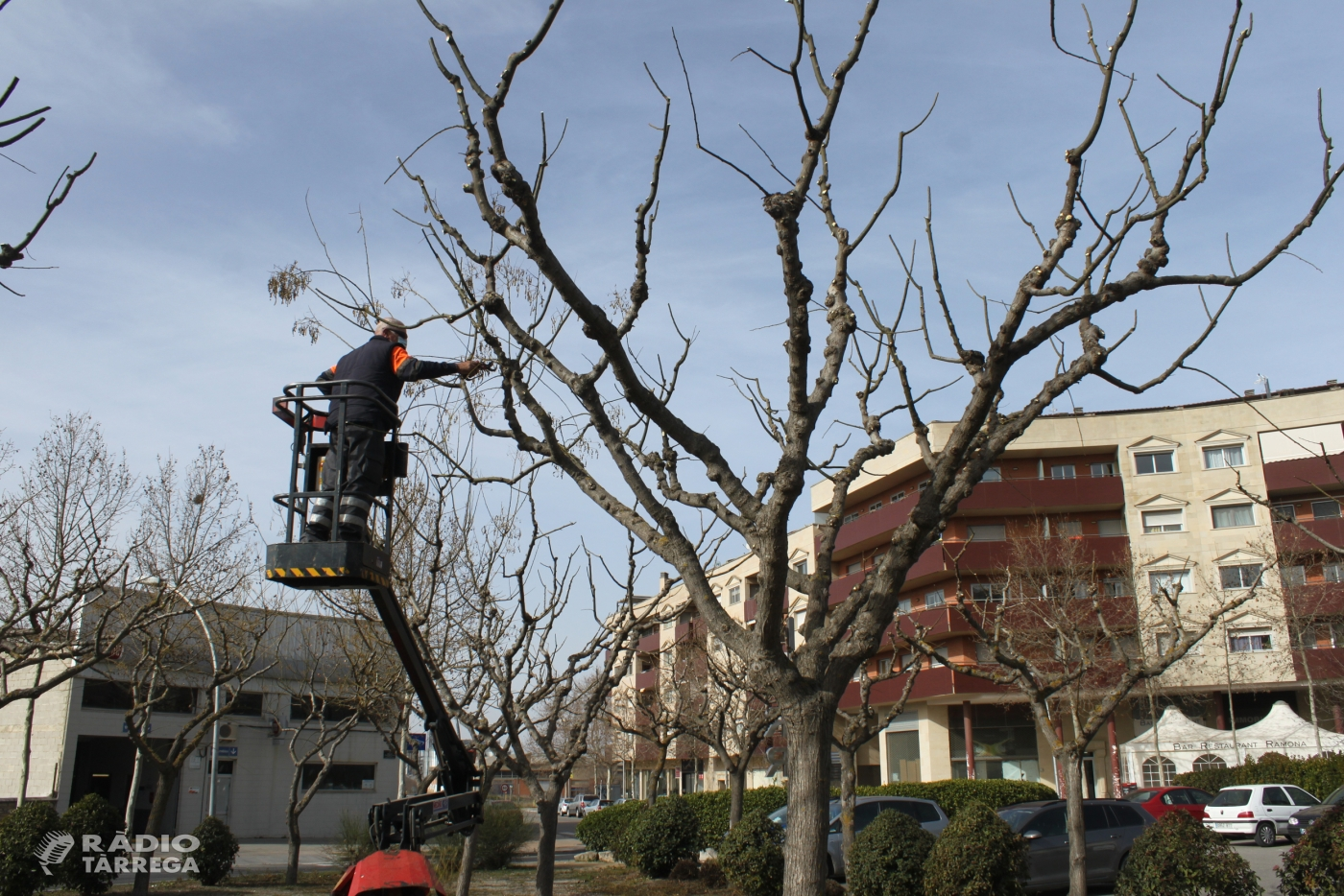 L'Ajuntament de Tàrrega ultima una nova campanya d'esporga d'arbres dels espais públics urbans