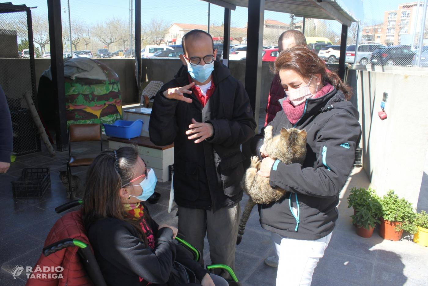 L'Ajuntament de Tàrrega posa en marxa el centre d'acollida temporal de gats perduts i abandonats