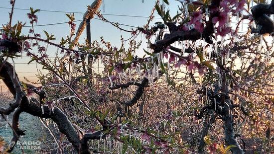 Els productors de fruita dolça de Ponent temen una caiguda de la producció per la gelada de la matinada passada