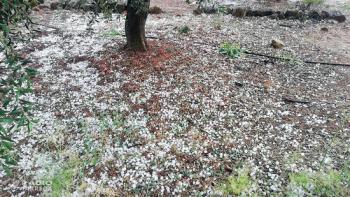 Les pedregades de dissabte a la tarda deixen danys en l'agricultura a les Garrigues i l'Urgell