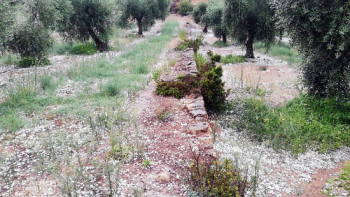 Les pedregades de dissabte a la tarda afecten 4.170 hectàrees de conreu, principalment a l'Urgell i les Garrigues