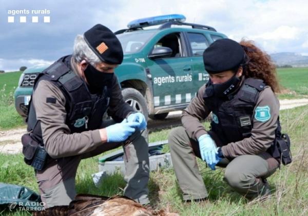 Els Agents Rurals denuncien l'ús d'esquers enverinats en una Àrea Privada de Caça a Verdú