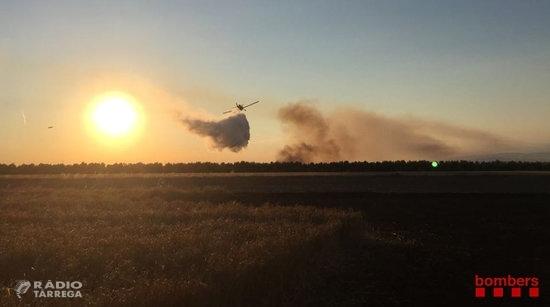 Un incendi agrícola a Belianes afecta més de 27 hectàrees de camps d'ordi sense segar