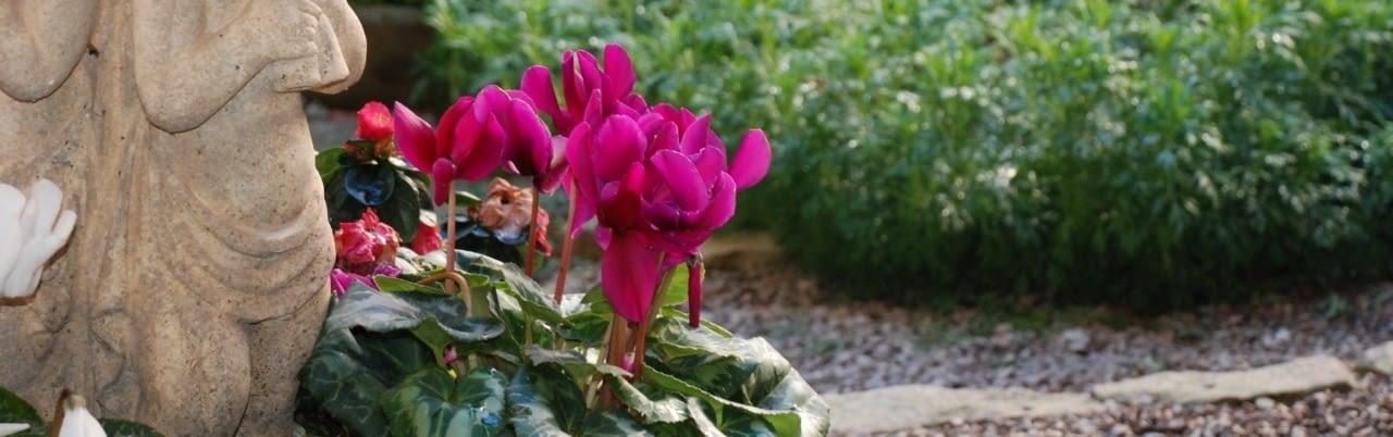 foto jardi