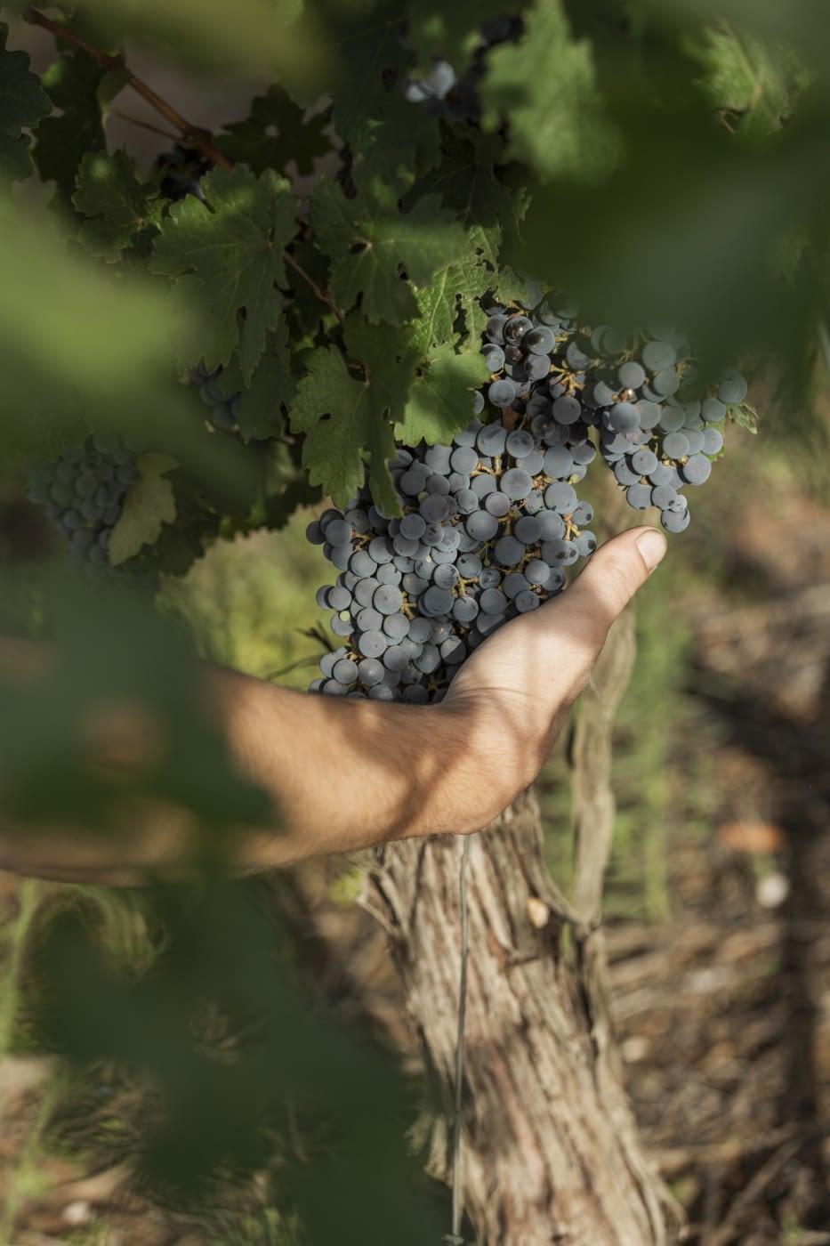 L'Urgell a la Ruta del Vi de Lleida