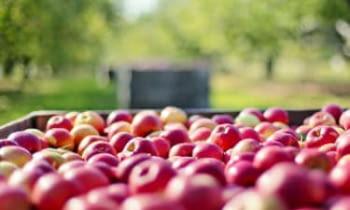 Recomanacions per a persones que treballen a la campanya de la fruita, la indústria alimentària i pels empresaris de la fruita