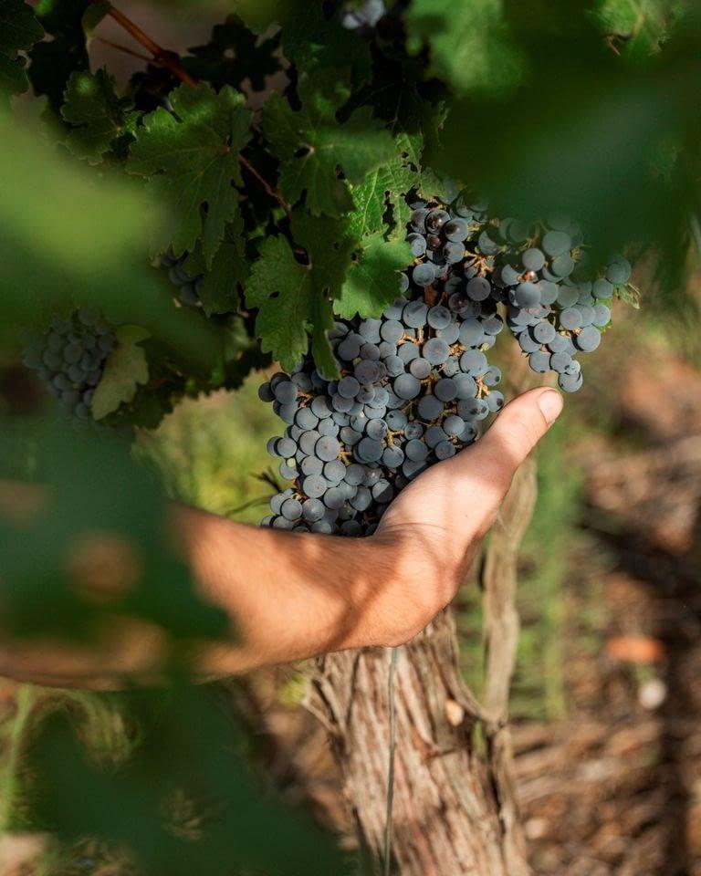 Vine a l'Urgell i gaudeix de la Ruta del Vi de Lleida