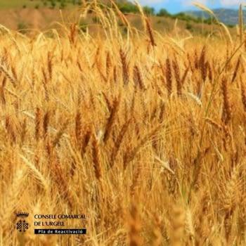 Es convoquen ajuts directes a l'agricultura, la ramaderia i altres règims d'ajut per la campanya 2021