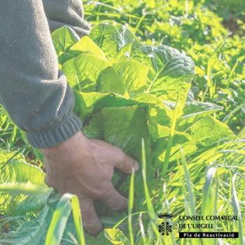 Ampliat el termini per donacions subvencionades al Banc dels Aliments per part dels productors agraris