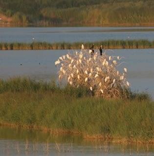 Observació d'ocells a l'estany d'Ivars i Vilasana
