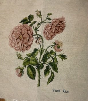Cuadrante rosas