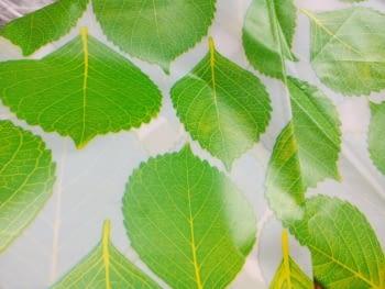 Cortina baño hojas - 1