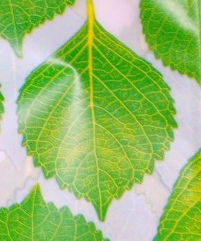 Cortina baño hojas - 2